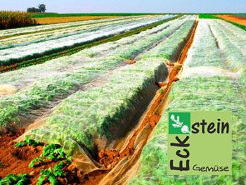 Gemüse der Familie Eckstein