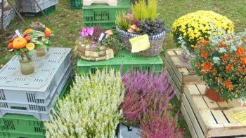 Verkaufsstand Floristik - Blumensträuße und Pflanzen